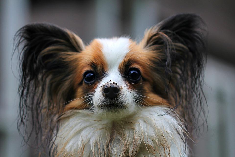 Skötselråd för hundar