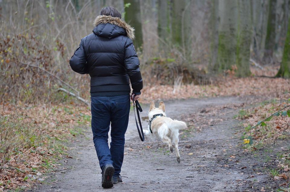 Hälsofördelar med att äga hund