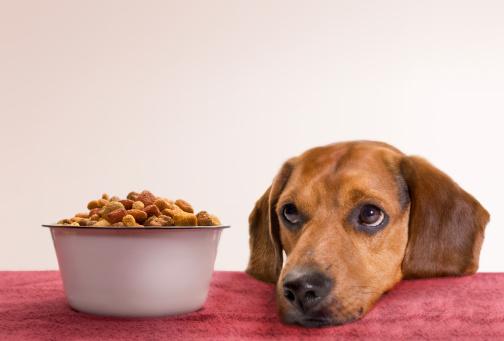 Rätt foder till hunden