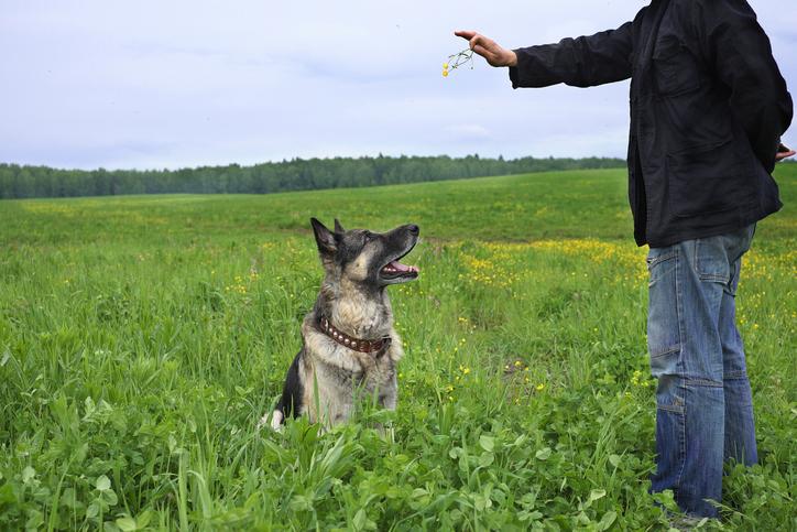 Kan en blind hund ha ett bra liv?